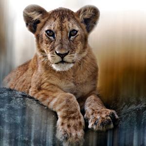 Cub by Bobbie Goodrich