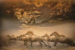Flying Manes by Bobbie Goodrich