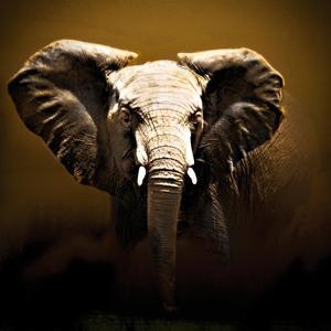 On Safari by Bobbie Goodrich