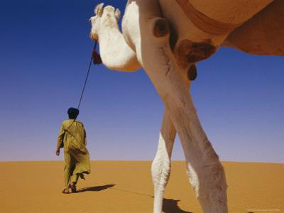 Tuareg Guide Leads His Camel into the Desert