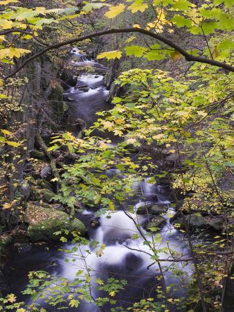 https://imgc.allpostersimages.com/img/posters/bode-in-autumn-harz-national-park-saxony-anhalt-germany_u-L-Q1EY1J50.jpg?artPerspective=n