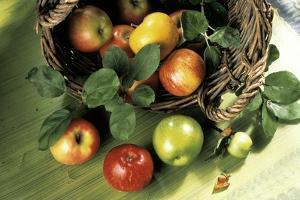 Assorted Apples in a Basket by Bodo A. Schieren