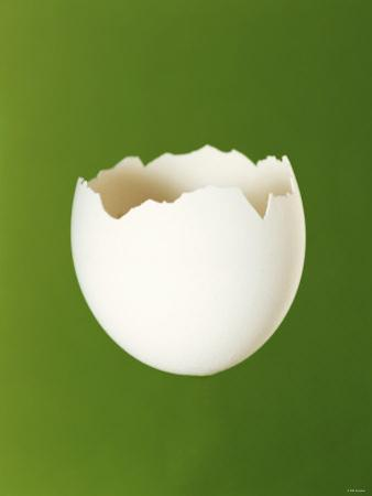 Half a White Egg Shell
