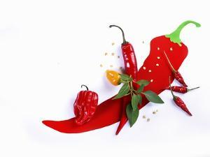 Various Fresh Chilli Peppers on a Picture of a Chilli Pepper by Bodo A. Schieren