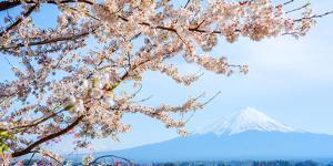 Fujisan View from Kawaguchiko Lake, Japan by Bogomyako