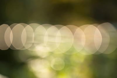 https://imgc.allpostersimages.com/img/posters/bokeh-nature-light-with-green-background_u-L-Q1EXZ5T0.jpg?artPerspective=n