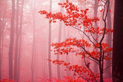 Foggy Autumn Day into the Forest by bonciutoma