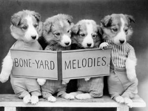 Bone-Yard Melodies