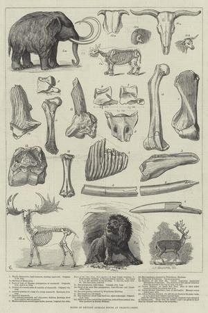 https://imgc.allpostersimages.com/img/posters/bones-of-extinct-animals-found-at-charing-cross_u-L-PVWFCY0.jpg?p=0