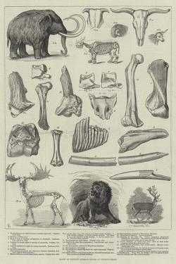 Bones of Extinct Animals Found at Charing-Cross