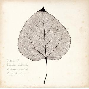 Cottonwood Leaf by Booker Morey