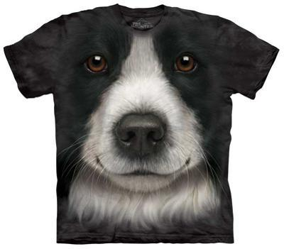 Border Collie Face