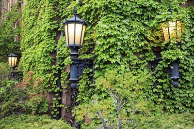 https://imgc.allpostersimages.com/img/posters/boston-massachusetts-usa-street-lamps-with-abundant-foliage-of-historic-buildings_u-L-Q1D0OOU0.jpg?artPerspective=n