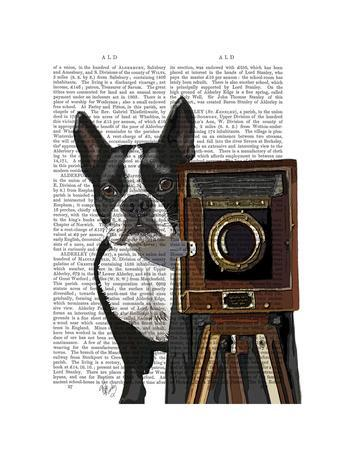 https://imgc.allpostersimages.com/img/posters/boston-terrier-photographer_u-L-Q11A93D0.jpg?p=0