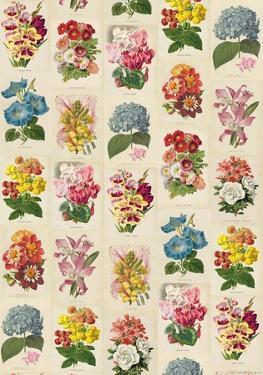Botanica - Vintage Style Italian Poster