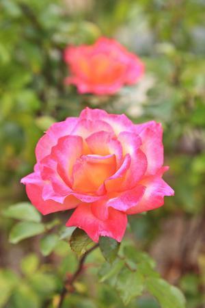 https://imgc.allpostersimages.com/img/posters/botanical-garden-balboa-park-san-diego-california-usa_u-L-Q1D0RWU0.jpg?p=0