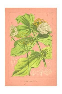 Botanical Illustration on Pink