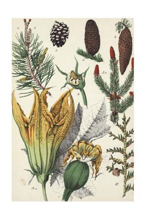 Botanical Pine Cones, Evergreen Branches, and Flowers