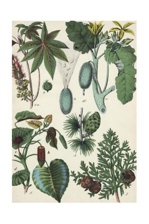 Botanical Plants and Seed Pods