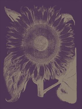Sunflower 13 by Botanical Series