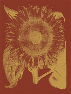 Sunflower 16 by Botanical Series