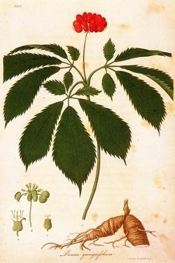 Botany: Ginseng