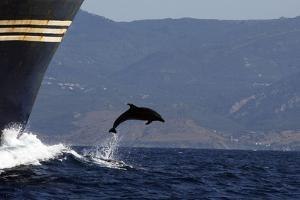 Bottlenose Dolphin Playing