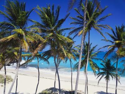 https://imgc.allpostersimages.com/img/posters/bottom-bay-barbados-caribbean_u-L-PNFQL70.jpg?artPerspective=n