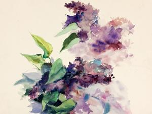 Purple Flowers by Boyan Dimitrov