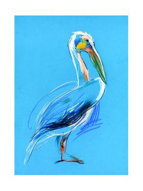 Sketch Of A Pelican by Boyan Dimitrov