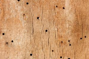 Wooden Texture by Boyan Dimitrov