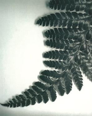 Fern Leaf II by Boyce Watt