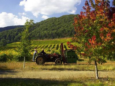 https://imgc.allpostersimages.com/img/posters/boynton-s-of-bright-vineyard-near-bright-victoria-australia_u-L-P2T8EY0.jpg?p=0