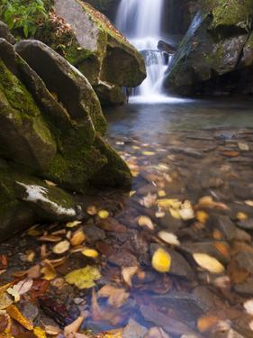Grotto Galls, Smoky Mountain National Park, Tn by Brad Beck