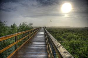 Paynes Prairie State Preserve, Florida: a View of the Prairie During Sunrise by Brad Beck