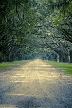 Savannah, Georgia: a Dirt Road Lined with a Canopy of Oak Trees at the Wormsloe Estate by Brad Beck