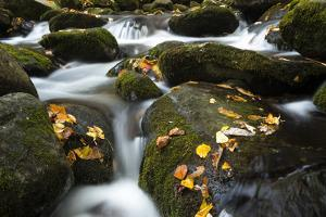 Smoky Mountain National Park, Tennessee: a Small Stream Flowing in Roaring Forks by Brad Beck
