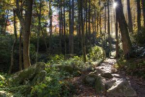 Smoky Mountain National Park, Tennessee: the Sun Shines Through the Forest Near Clingman's Dome by Brad Beck