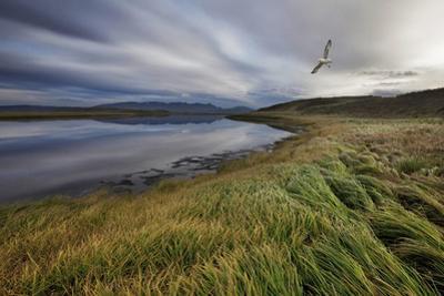 Stillness by Bragi Ingibergsson -