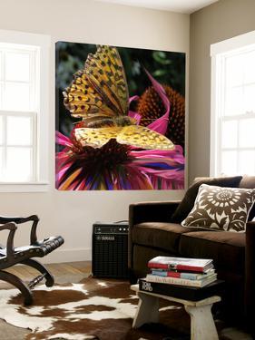 Floral Wonders 2 by Brago