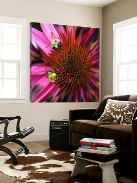 Floral Wonders 3 by Brago