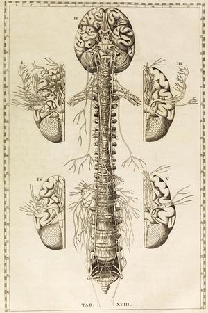 https://imgc.allpostersimages.com/img/posters/brain-nervous-system-illustration-1744_u-L-PYYGPP0.jpg?artPerspective=n