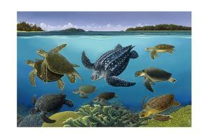 A Turtle Panorama Shows Different Aquatic Species by Bralt Bralds
