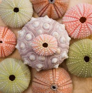Sea Urchin Group by Bramwell