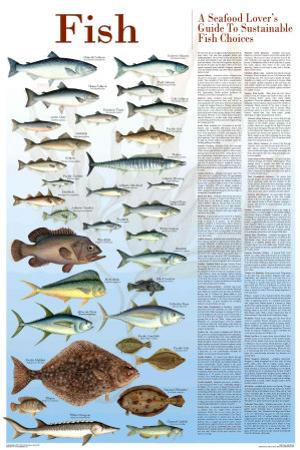 A Seafood Lover's Guide to Sustainable Fish Choices by Brenda Gillespie