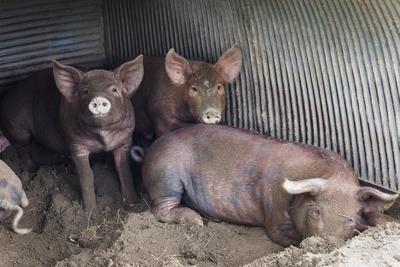 Wilbur And Company