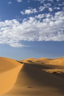 Africa, Morocco, Sahara. a Classic Landscape of the Dunes in Erg Chebbi by Brenda Tharp