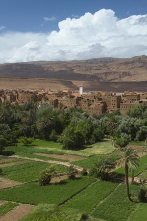 Africa, Morocco, Tinerhir. the Lush Oasis Outside of Tinerhir, in Todra Gorge by Brenda Tharp
