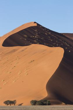 An s-curve on a tall orange-sand dune in Sossusvlei within Namib-Naukluft National Park, Namibia. by Brenda Tharp