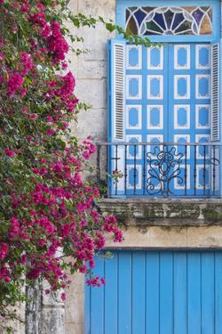 Cuba, Havana. Bougainvillea blooms in Old Town. by Brenda Tharp